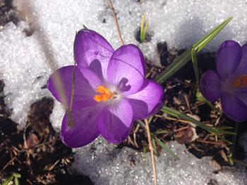 Spring in Kawarthas
